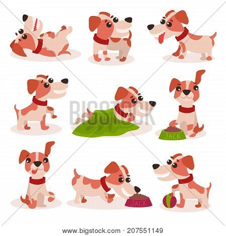 Funny jack russell terrier characters set, cute dog in different poses and situations vector Illustrations on a white background