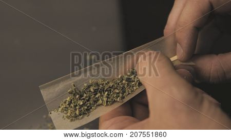 Rolling  Joint With Weed Buds Close-up. Smoking Culture In The World