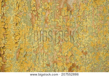 Old Paint Colored Wood Background, Aged Colors Cracks Texture, Weathered Painted Wall
