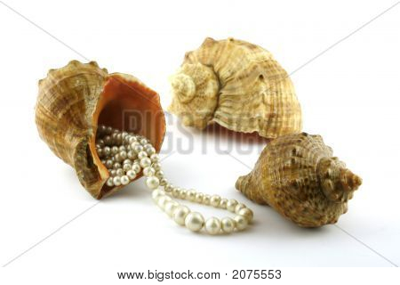 Cockleshell and beads. A close up. It is isolated on a white background. poster