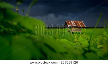 hut in farmland of people in countryside Thailand and Overcast sky