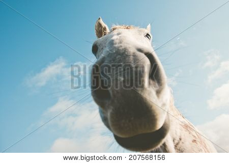 White horse portrait selfie funny pets close up nose wild nature animal thematic