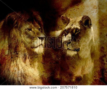 Lion couple - lion and lioness, on abstract structured background