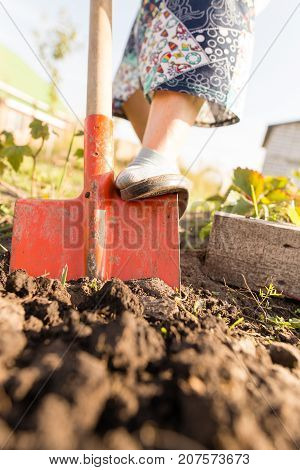 a woman digs a garden with a shovel .