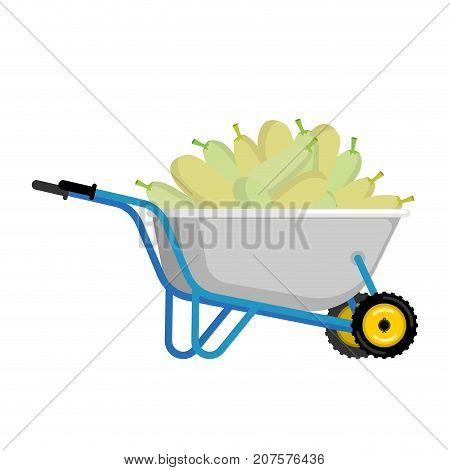Wheelbarrow And Zucchini. Vegetables In Garden Trolley. Big Harvest Vector Illustration