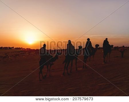 Tourists and bedouins on camels meet sunset in Sahara desert. Tunisia