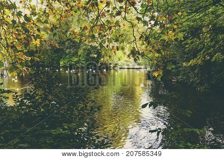Pond With Ducks And Yellow Leaves Of Tree Branches, Autumn At The Park