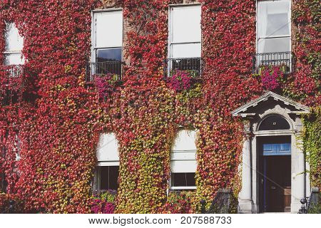 DUBLIN IRELAND - September 30th 2017: Building in central Dublin covered in autumn-coloured red ivy