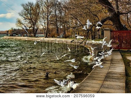 Seaguls flying on the shore of lake Ammersee in Bavaria