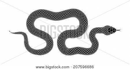 Vector Snake silhouette illustration. Black serpent tattoo design isolated on a white background.