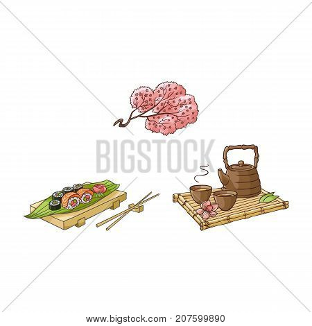 vector flat asian japan, china oriental symbols set. traditional sakura branch with flowers, sushi with ginger, wasabi, kettle with caps for tea ceremony. Isolated illustration on a white background