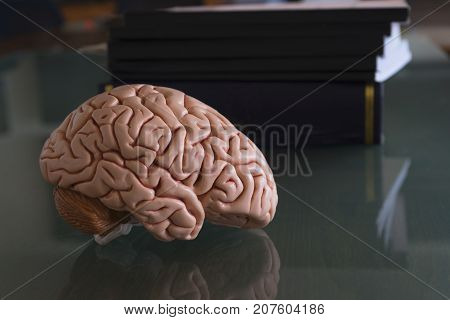 Human brain model and textbooks with reflection on the table of medical office
