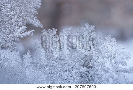Winter background.  Original frosty pattern in form of leaves of whimsical plants on winter window glass and copy space.