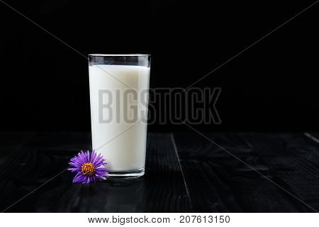 Just a glass of milk on a black background and a purple flower on a wooden table
