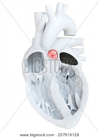 3d rendered medically accurate illustration of the pulmonary valve