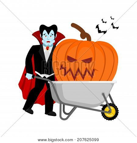Halloween Wheelbarrow And Vampire Dracula. Big Terrible Pumpkins. Vintage Pumpkin. Vector Illustrati