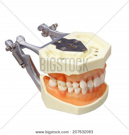 Orthodontic somatology, denture isolated on white background