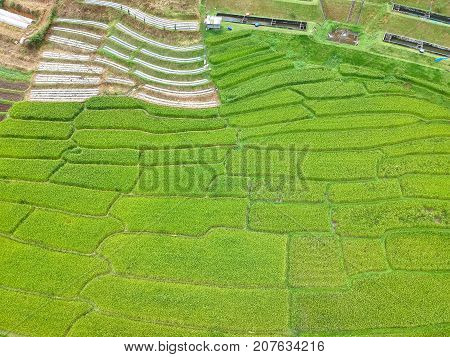 Rice Terrace At Doi Inthanon National Park  Chom Thong District  Chiang Mai Province, Thailand In Bi