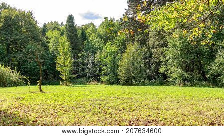 Large glade in the park covered grass among a conifers and deciduous trees in autumn day.