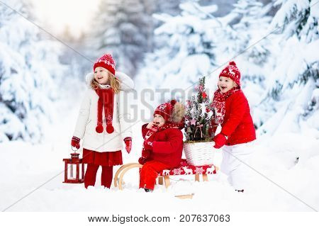 Children With Christmas Tree. Snow Winter Fun For Kids.