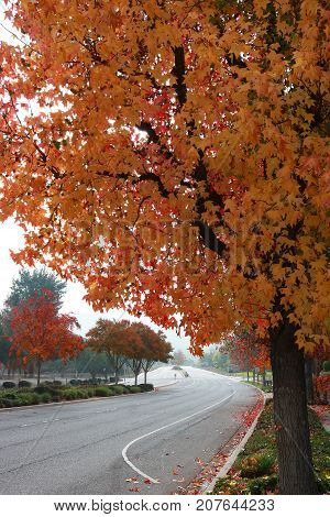 Suburban Street with Fall Leaves on Trees Arching Over Frame
