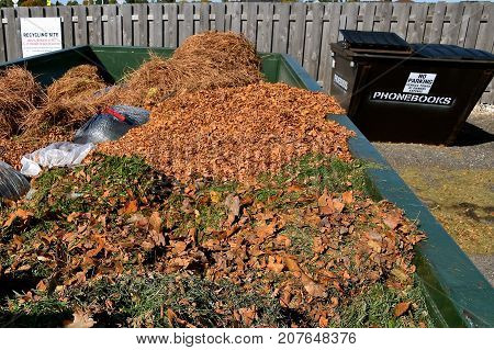 Autumn leaves and disposable plastic bags of grass clippings are in a large container  at a collecting station prior to being moved to a compost.