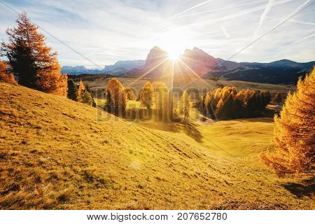 Magic image of larchs on the slopes of bright hills. Gorgeous scene. Location place Dolomiti alps, Compaccio, Seiser Alm or Alpe di Siusi, Bolzano province, South Tyrol, Italy. Europe. Beauty world.