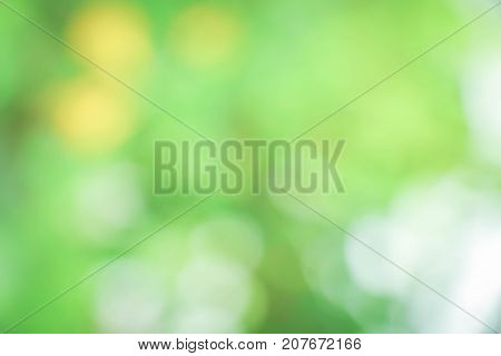 green blurred of nature background/ green bokeh natural background / abstract nature background