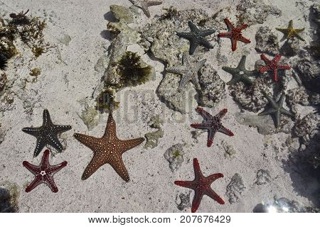 Aquatic photography showing a group of starfishes with amazing bright colors in Zanzibar.