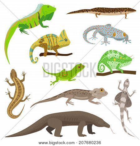 Different lizard reptile animals isolated on white vector illustration.. Reptile hand drawing wild monster character.
