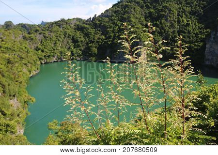 Tree leaves with lagoon and mountain view of Ang Thong Island Thailand.