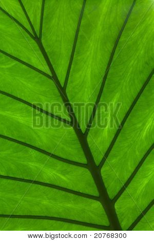 Green Leaf Detail