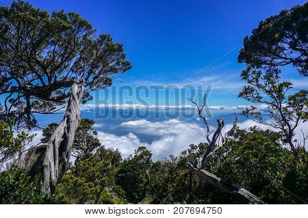 Tropical jungle exotic trees in the mountain trail to the Majestic Mountain Kinabalu,Sabah Borneo,Malaysia.Nature view of Borneo tropical jungle.