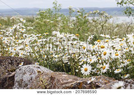 Cottage garden flowerbed with summer flowers in bloom