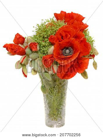 Red Wild Flowers Of Papaver Rhoeas Bouquet In A Transparent Vase, Corn Field Poppy With Buds, Close