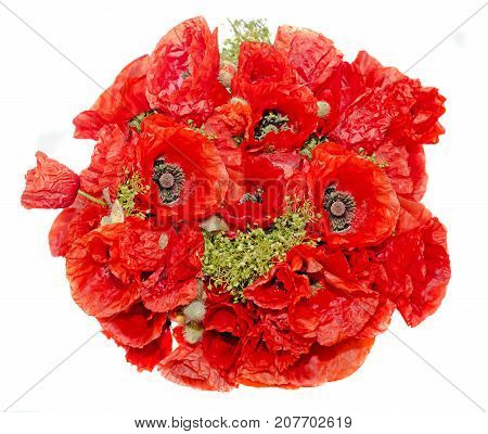 Bouquet Of Red Wild Flowers Of Papaver Rhoeas Close Up (corn Poppy, Corn Rose, Field Poppy), Isolate