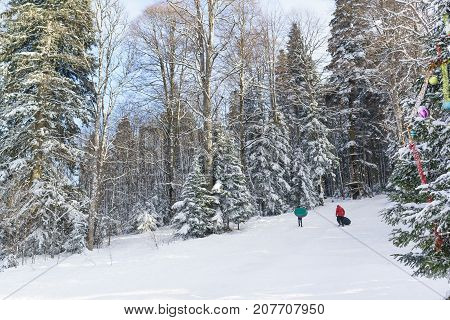 Children And Adults Ride On A Snowy Hill. Sunny Winter Day In The Mountain Coniferous Forest. Tree D