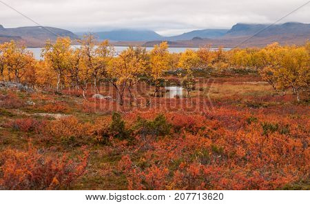 Red and yellow golden warm autumn meadow landscape in Lapland with small river and lake. Good backround image.