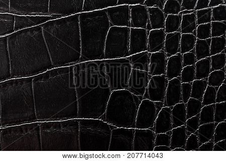 the texture of the skin is gray Studio still life photography