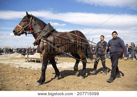 Horse Heavy Pull Tournament