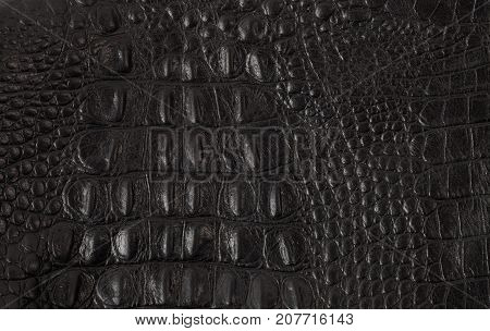 Background texture of leather. The place to insert the text and use textures.