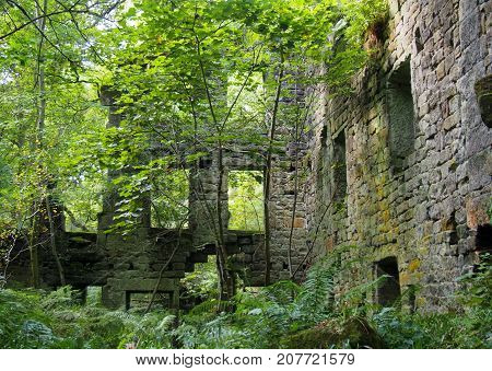 the ruins of staups mill overgrown with trees and ferns in summer n
