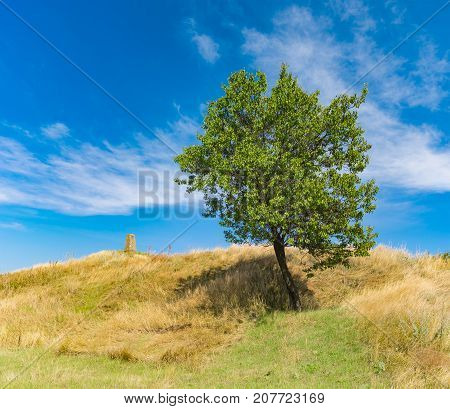 Landscape with ancient burial mound and lonely apricot tree at late summer season