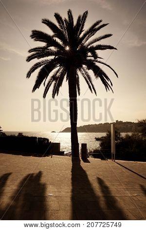 Vintage mediterranean outdoors, palmtree and sea view