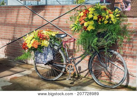 With flowers decorated bicycle parked against a wall of a greenhouse.