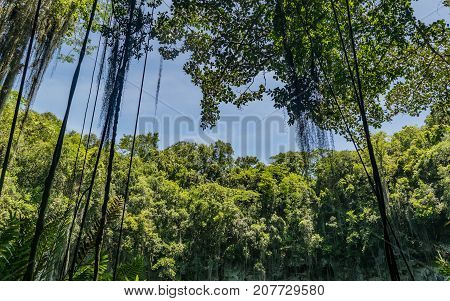 Beautiful landscape of vegetation and the blue sky The Three Eyes National Park Dominican Republic.