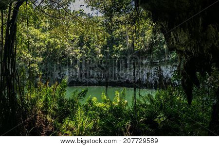 Beautiful landscape of vegetation bordering groundwater hole The Three Eyes National Park Dominican Republic.
