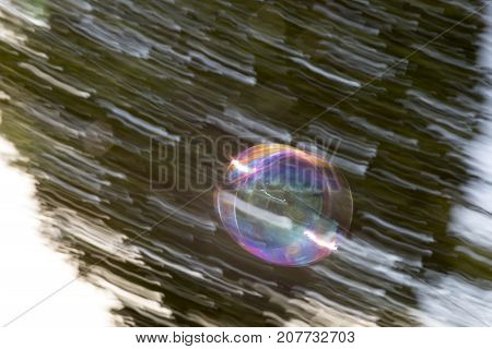 Soap Bubble Pan Abstraction In Bush