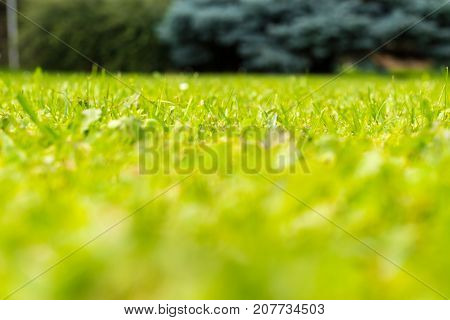 Low angle view of green fresh grass with tree in background.