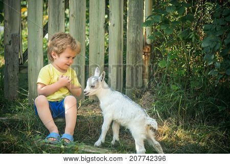 Joy, Friendship, Friends In Nature, Animal And Boy, Child And Goat In Village Rejoice. Sincere Emoti
